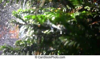 Splashes water on bokeh spellbinding background fir-tree....