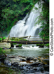 Tropical rain forest landscape