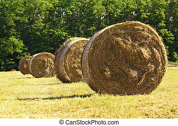 bale hay background - classic hay bales in field, rural...