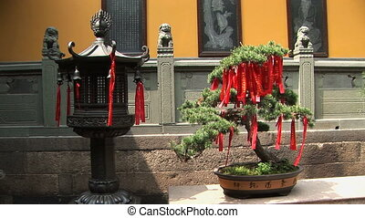 Lantern & Bonsai Tree