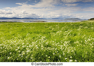 Mountains,  hte, förgrund, Snö, norrman,  fjord, Blomstrar