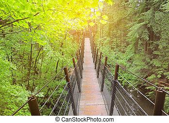 Suspension bridge. - Suspension bridge for close watching of...