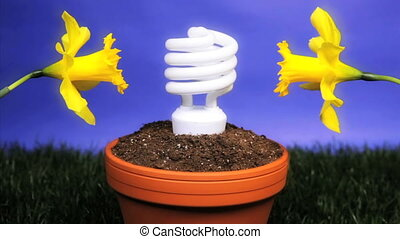 Energy saving light bulb planted