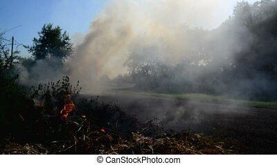 Summer grass is burning in wildfire by the driveway....