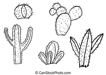 hand draw sketch of cactus at white