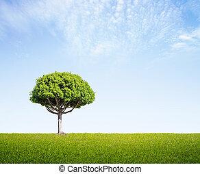 field with big tree - green field with big tree