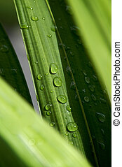 detail of morning rain drops on palm tree fronds