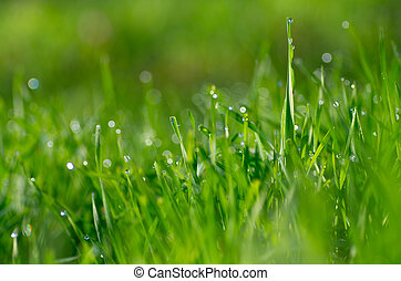 grass and beatiful bokeh - background with bunch of grass...