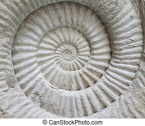 Ammonite prehistoric fossil on the surface,background...