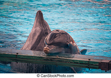 Dolphins - Dolphinarium, dolphins show in Lisbon Zoo...