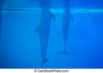 Dolphins in Lisbon Zoo - Dolphinarium, dolphins show in...