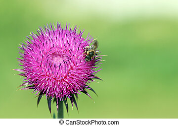 bee on flower spring season