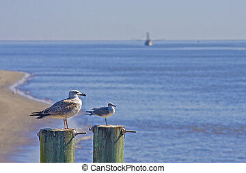 Seagulls and Shrimp Boat - Seagulls on two posts with a...
