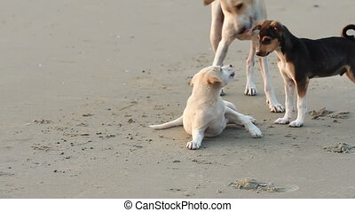 playing puppy's - dogs playing on the beach