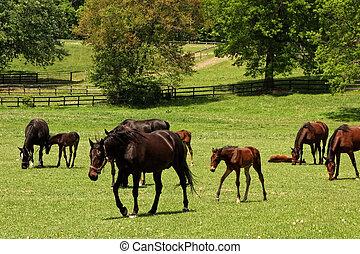 caballos, pasto