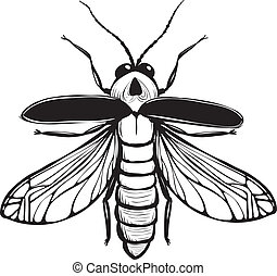 Firefly Insect Black Inky Drawing - Bug glowworm or...