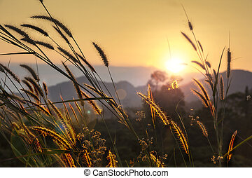 pampas grass rim light mountain landscape background
