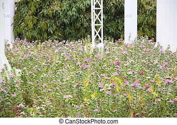 Flower garden bloom.