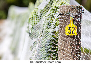 Vine Label - Young vines under netting and signposted in the...