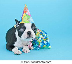 小狗, 生日, 眨眼