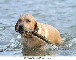 cão, tocando, buscar, água