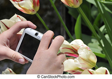 child making photo of tulips. Spring landscape.