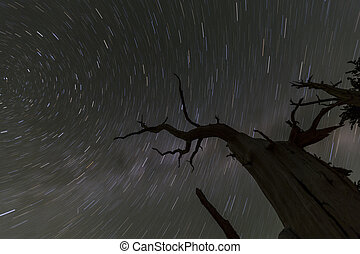 Wicked Tree Star Trails - Night sky star trails with dead...