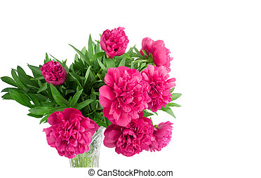 Beautiful bouquet of pink peonies on a white background...