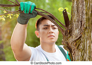 Asian gardener cropping branch - Asian gardener cropping a...