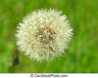 Tender, gentle flower - Agricultural field