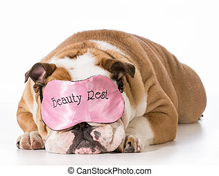 dog sleeping - english bulldog wearing beauty rest sleeping...