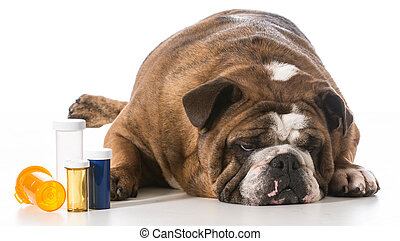 veterinary care - dog laying beside several pill bottles on...