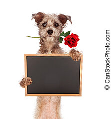 Terrier Mix Dog Holding Blank Chalkboard With Rose in Mouth...
