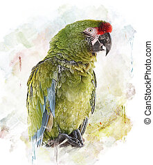 Watercolor Image Of Parrot - WatercolorGreen Parrot...