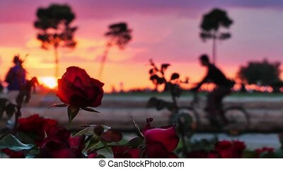 Roses and People Silhouette