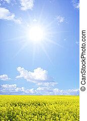 rape field -  Rape field and clouds in sky