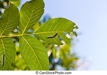 Caterpillar on the leaf of tree photo