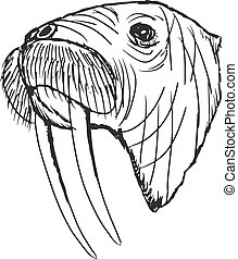 walrus - hand drawn, sketch, cartoon illustration of walrus