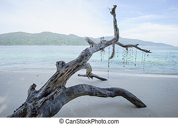 Dead tree on a beach at sunshine, Thailand