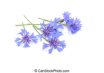 Cornflowers Isolated on White Background