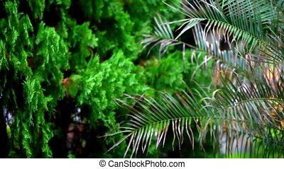 Rain on palm and other tree with blurred background. Shift in focus from near to far distances and back with professional lens