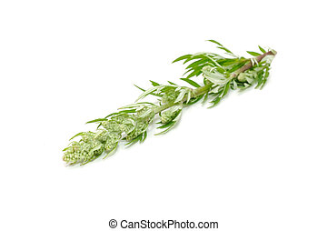 común, Ajenjo, (Artemisia, Vulgaris), aislado,...