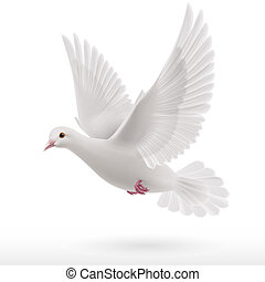 White dove - Flying white dove on white background as symbol...