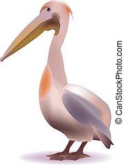 : Pelican - Big pink bird