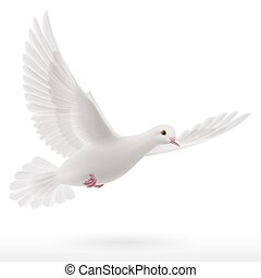 White dove flying on white background. Symbol of peace