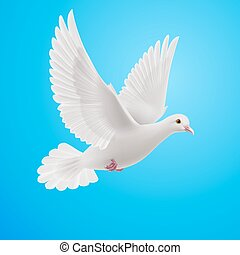 White dove - Realistic white dove on blue background Symbol...