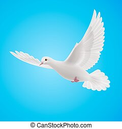White dove - Flying white dove on blue background. Symbol of...