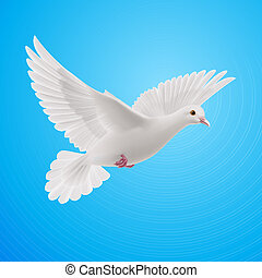 White dove - Realistic white dove on blue sky background....