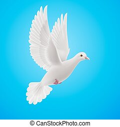 White dove - Realistic white dove flying on blue sky...