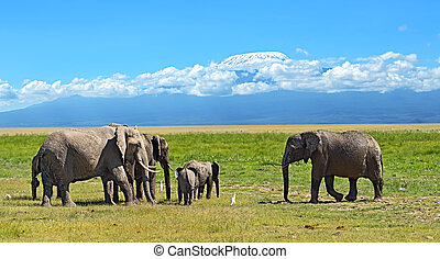Kilimanjaro elephants in Amboseli National Park, Kenya